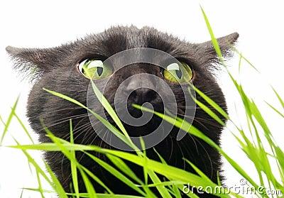 Gato y hierba