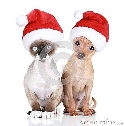 Gato y perro divertidos en sombreros de la Navidad
