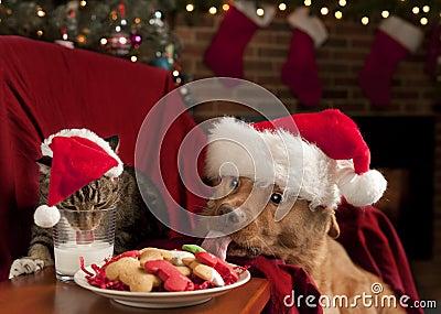 Gato y perro que devoran las galletas y la leche de Santa