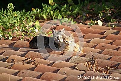 Gatos em um telhado quente