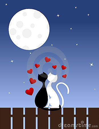 Gatos en amor