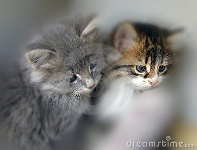 Gatos pequenos
