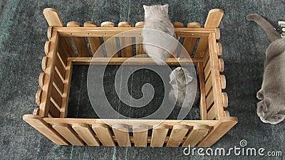 Gattini che scalano un recinto di legno stock footage