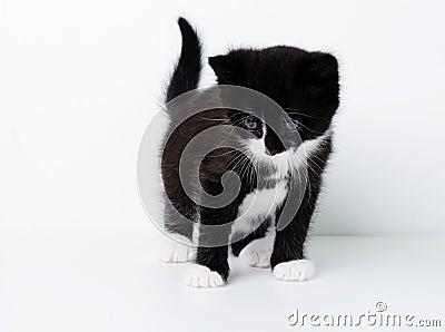 Gattino piacevole