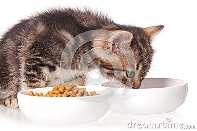 Gattino sveglio