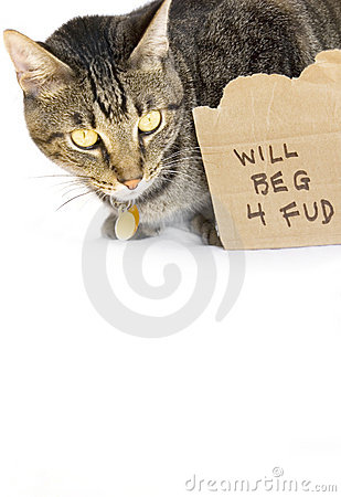 Gatto che elemosina l alimento