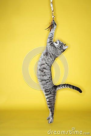 Gatto che gioca con le mattonelle.