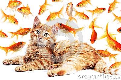 Gatto che guarda i pesci rossi fotografia stock immagine for Pesci rossi piccoli