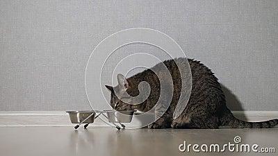 www nero ragazze mangiare micio com