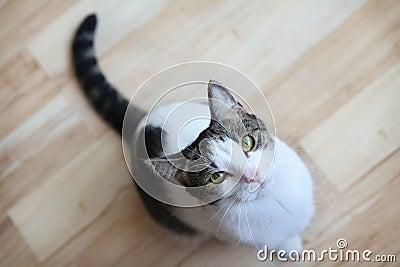 Gatto che osserva in su