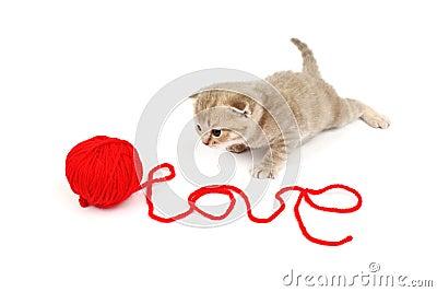 Gatto di amore
