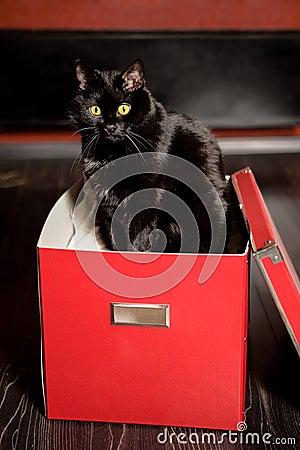 Gatto nella casella