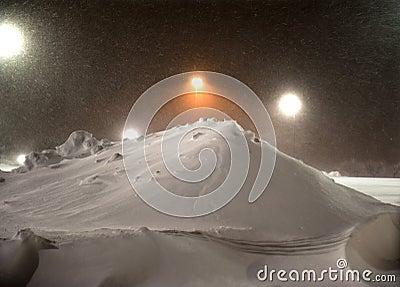 Gatto selvatico che rimuove neve