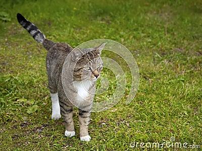 Gatto sull erba