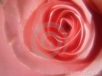 Gaussian Pink Rose