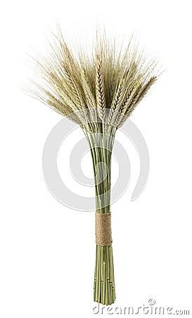 Gavilla de trigo