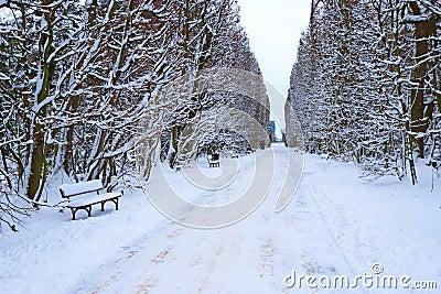 Gdański Oliwa park w zima czasie