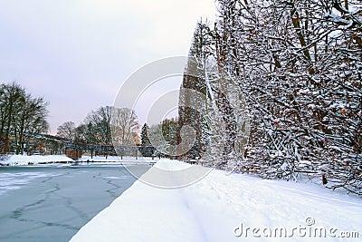 Gdański Oliwa park w zimie