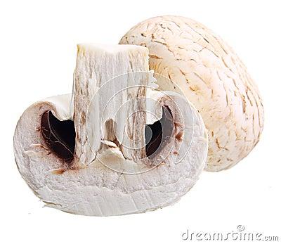 Geïsoleerde champignonpaddestoelen