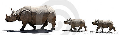 Geïsoleerde. de familie van de rinoceros