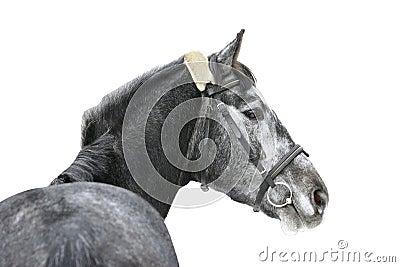 Geïsoleerdl paard