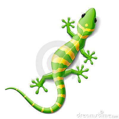 Free Gecko Royalty Free Stock Photo - 17759375