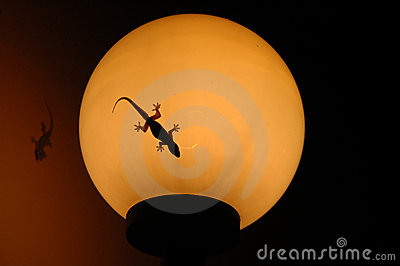 Gecko on lamp