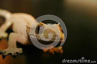 Gecko Smiles