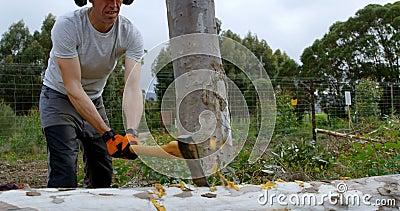Gefallener Baum des Holzfällers Ausschnitt mit Axt 4k stock footage