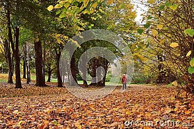 Gehen in Herbst-Holz