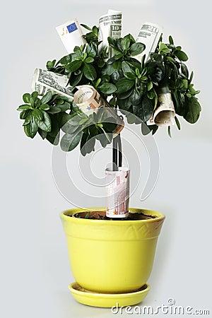 Geldbaum