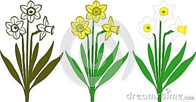 Gele narcissen