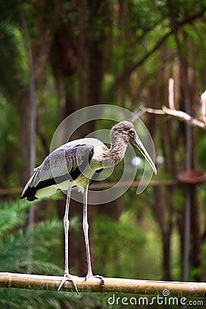 Gemalter Storch