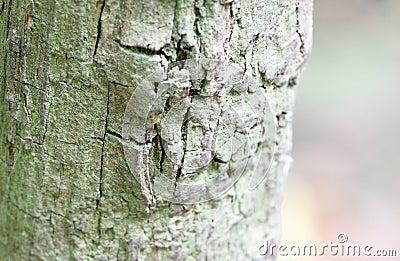Gemasert vom alten Baum