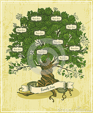 Free Genealogical Tree On Old Paper Background. Royalty Free Stock Photo - 50886055