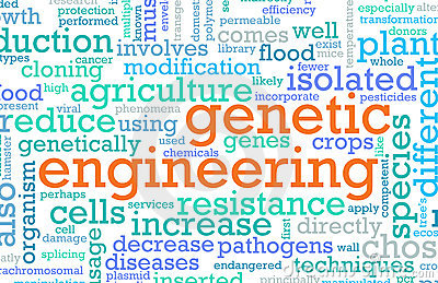 genetic engineering issues essay