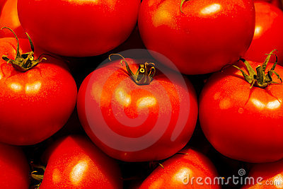 Genetically modified tomatos