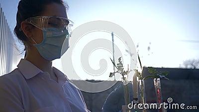 Genetisch geänderte Ernten, Laborassistent in Maske mit Reagenzgläsern in den Händen betrachtet Exemplar des Grüns draußen stock video