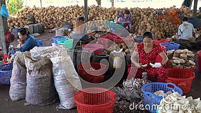 Gente local que trabaja en la planta de tratamiento del coco, delta del Mekong, Vietnam, Asia sudoriental metrajes