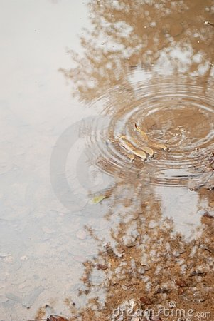 A gentle beige rain puddle with rings