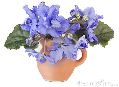 Gentle blue violets in a small jug