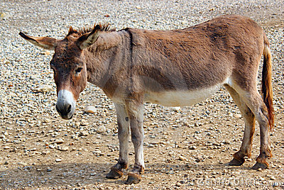 Gentle donkey