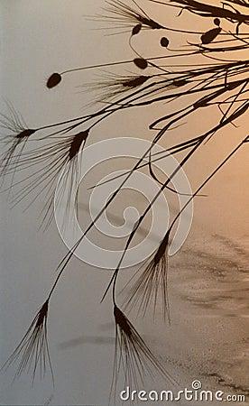 Gentle Grasses (Barley & Briza)