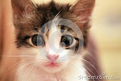 Gentle kitten