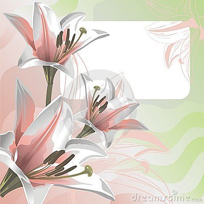Gentle lily and greeting card