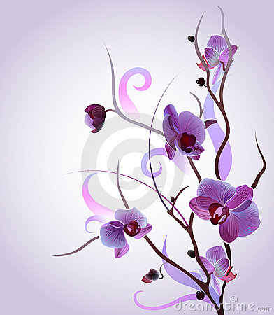 Gentle orchid branch