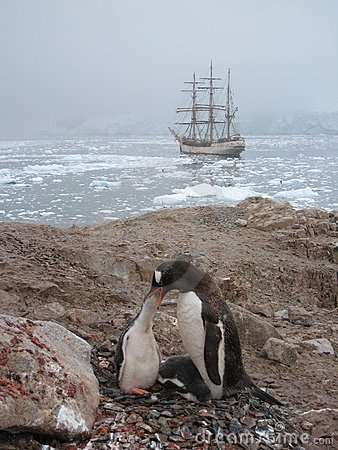 Gentoo penguin feeding at Neko Harbour