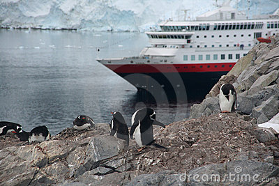 Gentoo penguin rookery with cruise ship