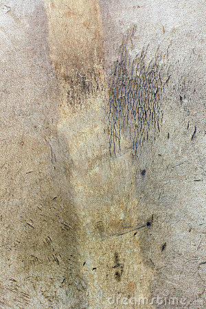 Genuine leather texture
