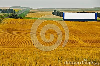 Geometric Design in Golden Wheat Fields Stock Photo